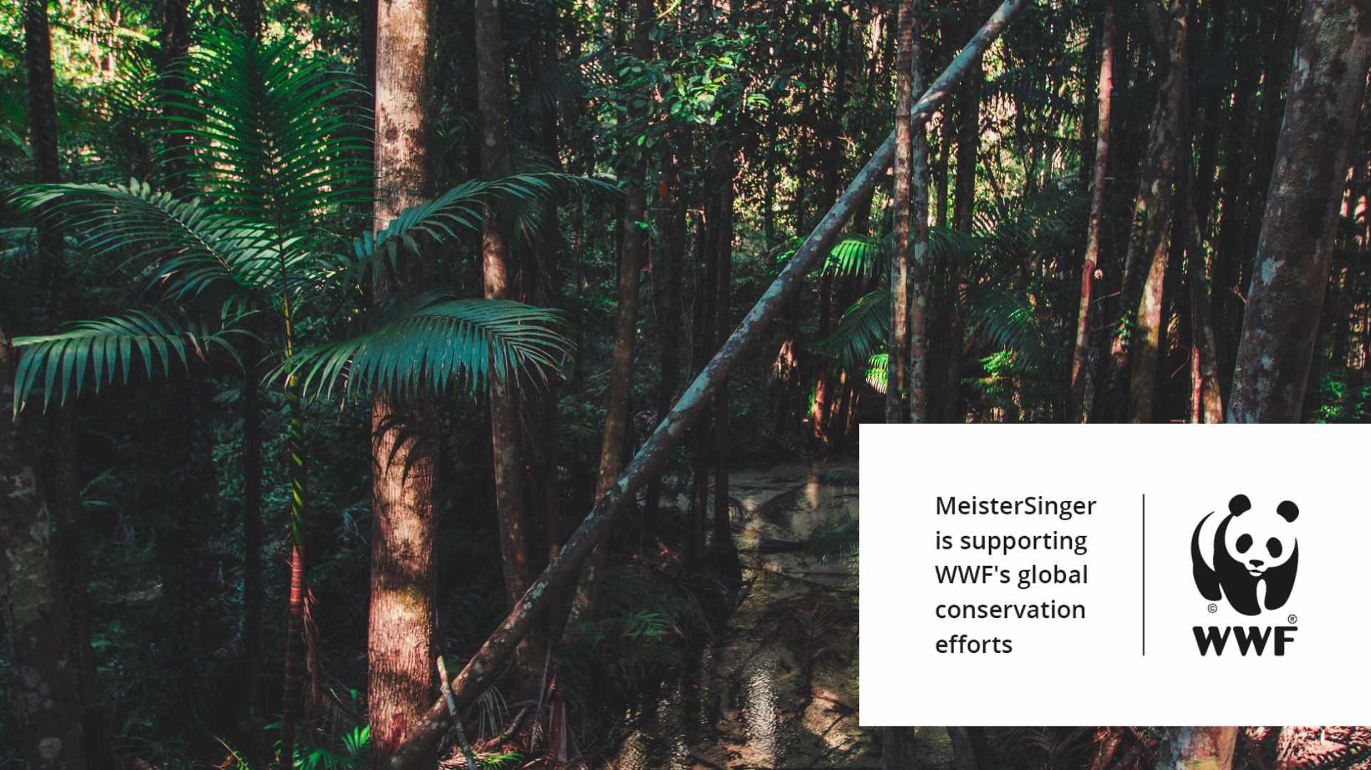 MeisterSinger WWF Forest
